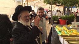 Een Joodse man inspecteert een loelav, een traditioneel object voor het Loofhuttenfeest. Beeld: Israël Idoed Reizen